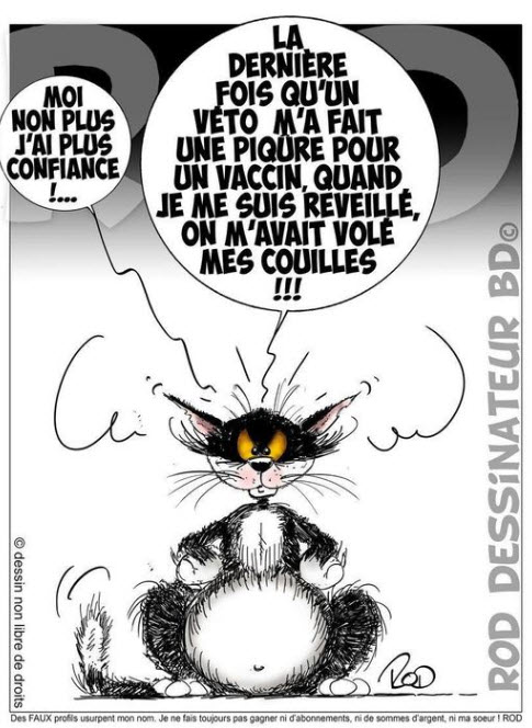 Loisirs de chat - Page 3 Chat10