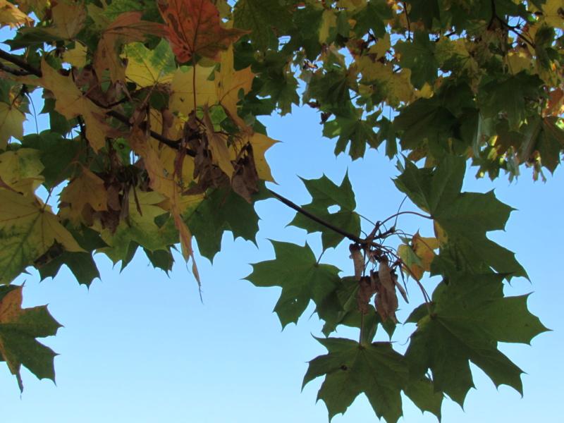l'automne et ses couleurs  sont là Dossie19
