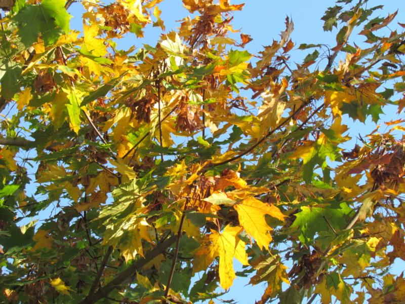 l'automne et ses couleurs  sont là Dossie20