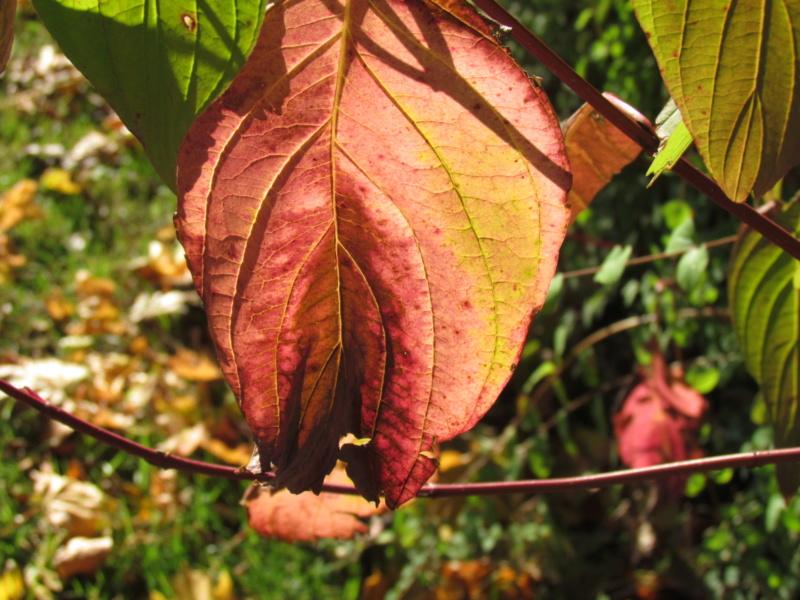 l'automne et ses couleurs  sont là - Page 2 Dossie21