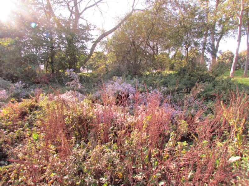 l'automne et ses couleurs  sont là - Page 2 Dossie23