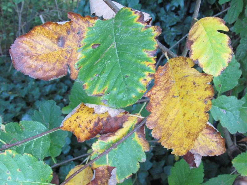 l'automne et ses couleurs  sont là - Page 2 Dossie24