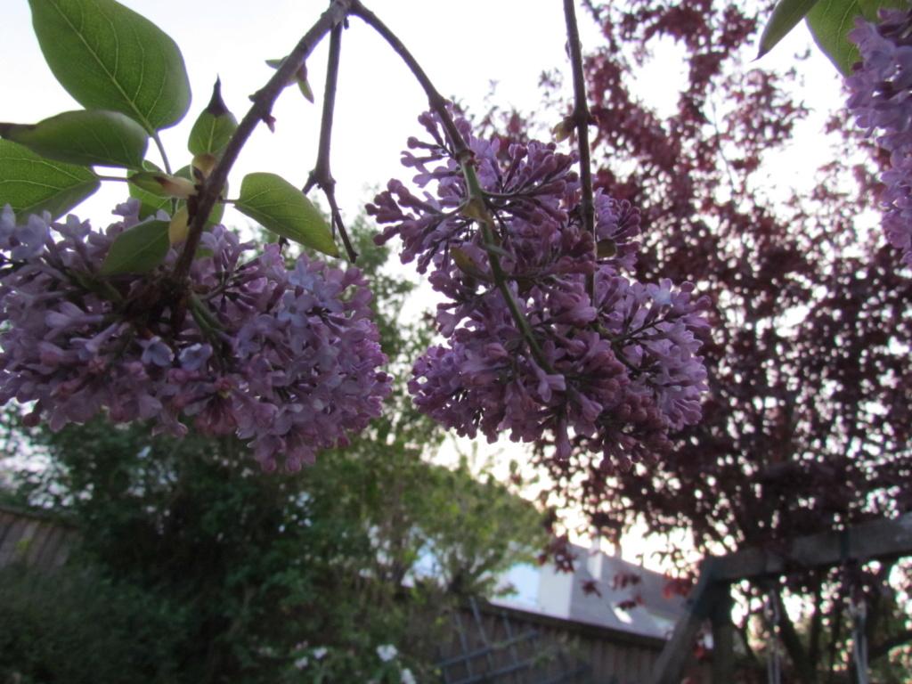 photo du jour - Page 17 Fleur_10