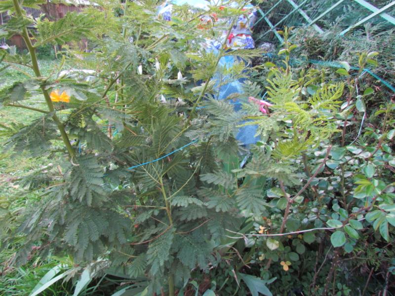 mon jardin 2020 Fleur_13