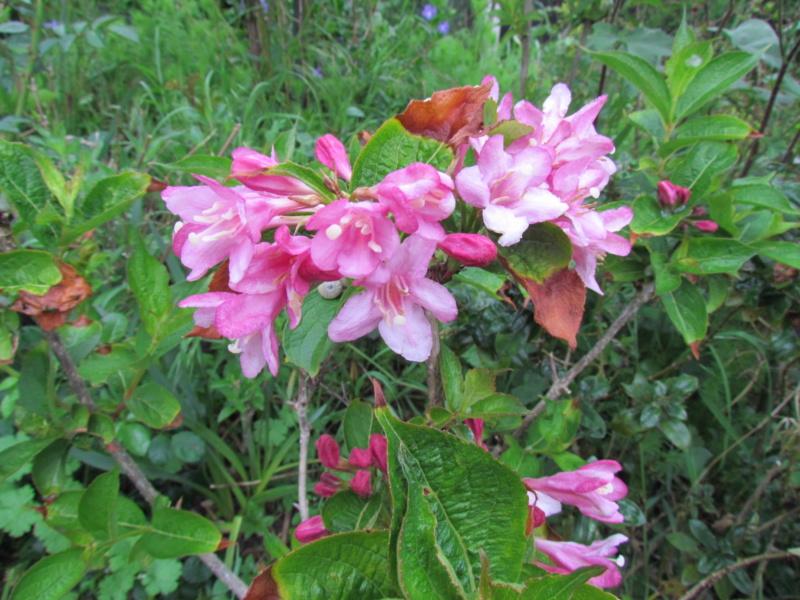mon jardin 2020 Fleur_16