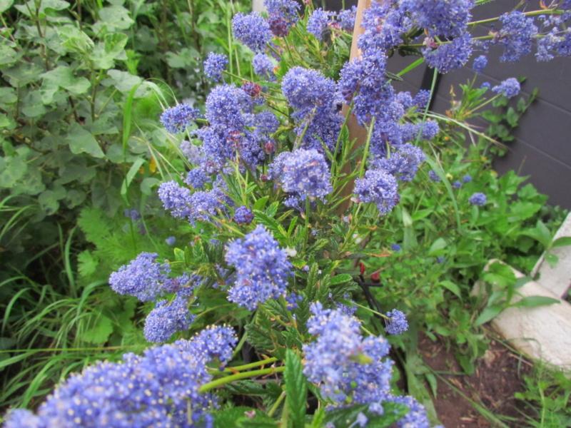 mon jardin 2020 Fleur_19