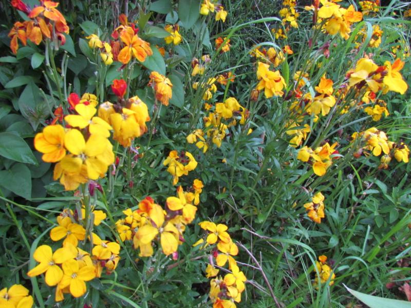 mon jardin 2020 Fleur_20
