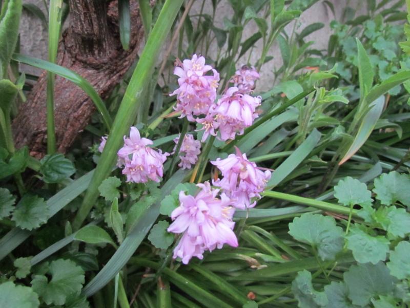 mon jardin 2020 Fleur_22