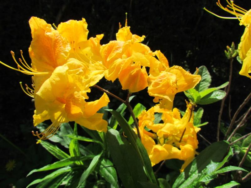 mon jardin 2020 Fleur_23