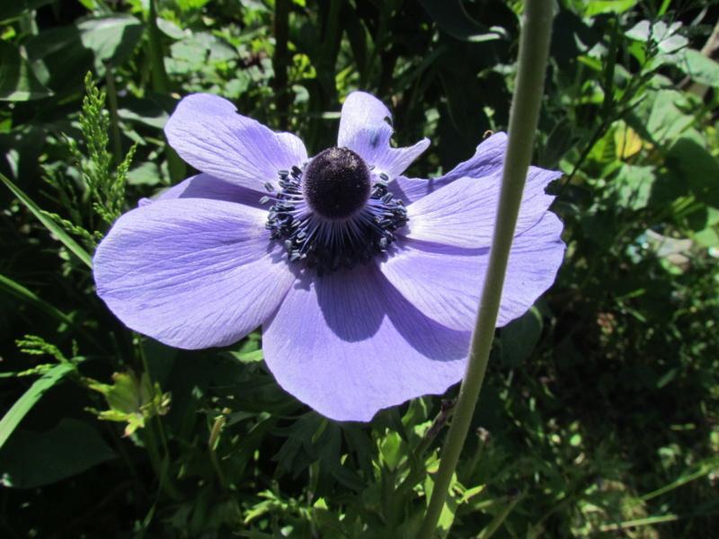 mon jardin 2020 Fleur_25