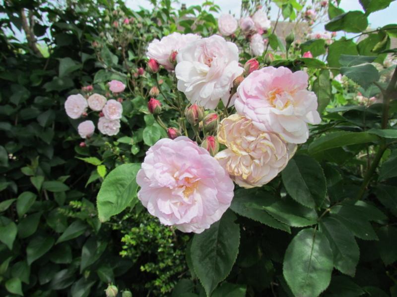 mon jardin 2020 Fleur_29