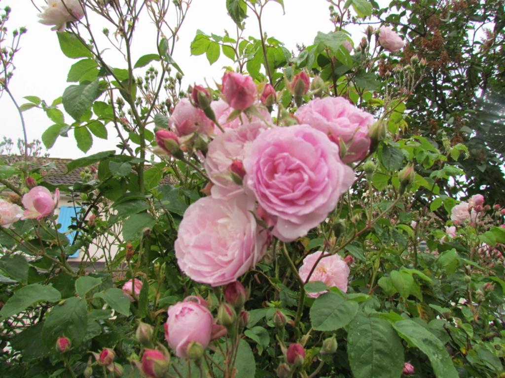 photo du jour - Page 17 Fleur_40