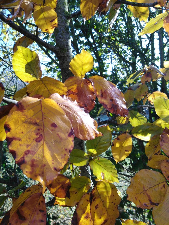 l'automne et ses couleurs  sont là - Page 2 Img_2026