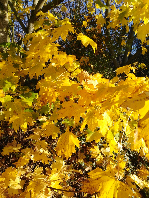 l'automne et ses couleurs  sont là - Page 2 Img_2027