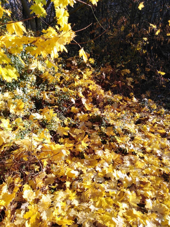 l'automne et ses couleurs  sont là - Page 2 Img_2029