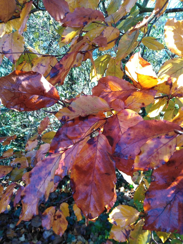 l'automne et ses couleurs  sont là - Page 2 Img_2030
