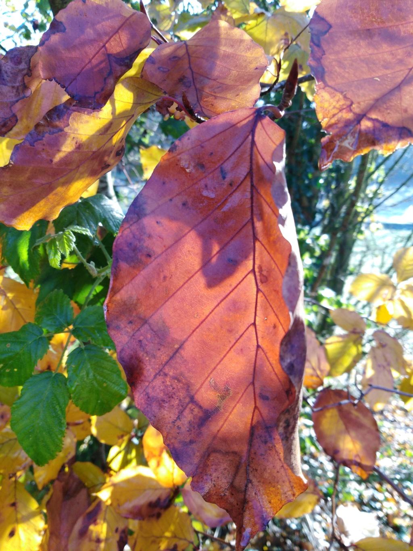 l'automne et ses couleurs  sont là - Page 2 Img_2031