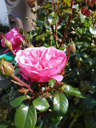 mon jardinet 2019 Img_2079