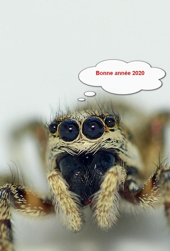Bonne année 2020 16_06_16