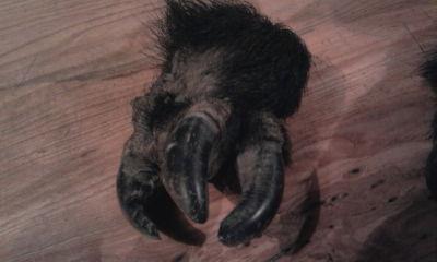 pieds bizarres Photo010
