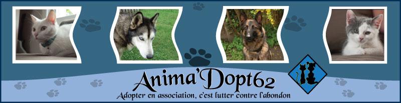 Association de lutte contre la maltraitance animale