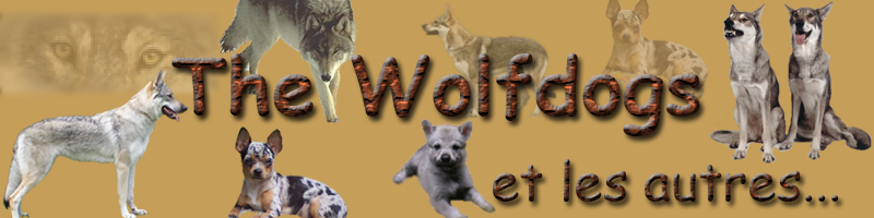 The Wolfdogs and others...