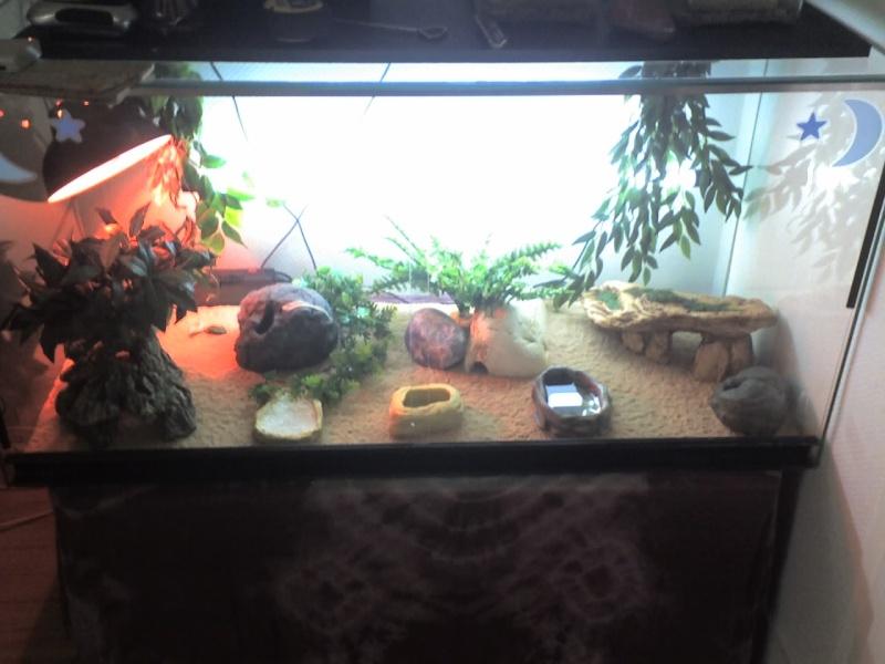 Mes terrariums Les_gr10