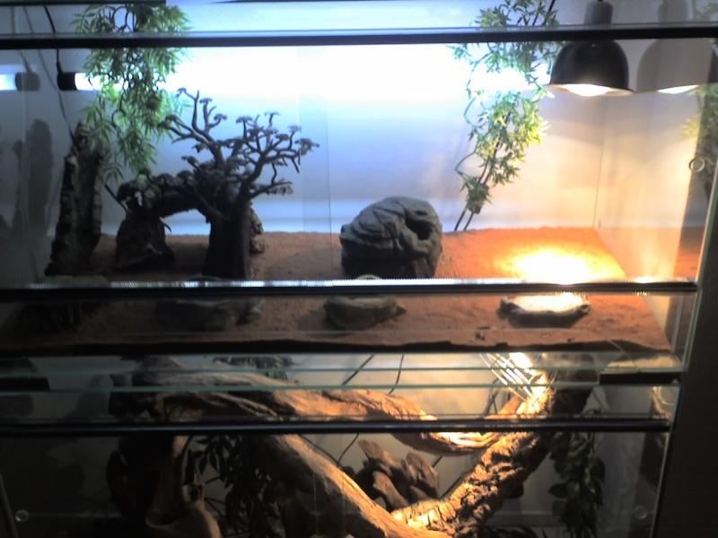 Mes terrariums Les_pe10