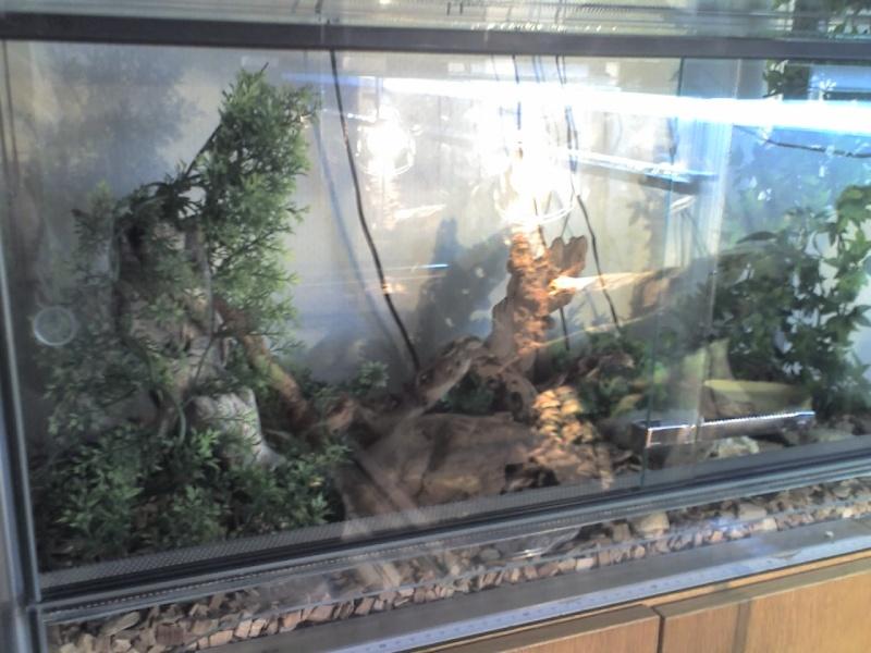 Mes terrariums Terra_10