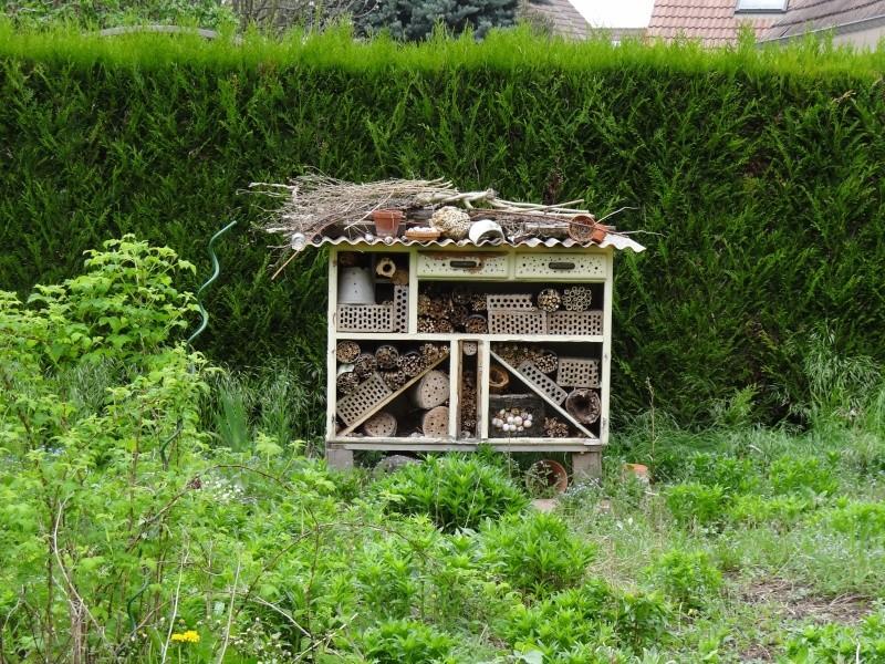Polistes hôtel à insectes Dsc08413