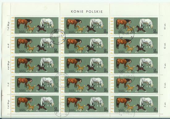 Pferde Polenp10