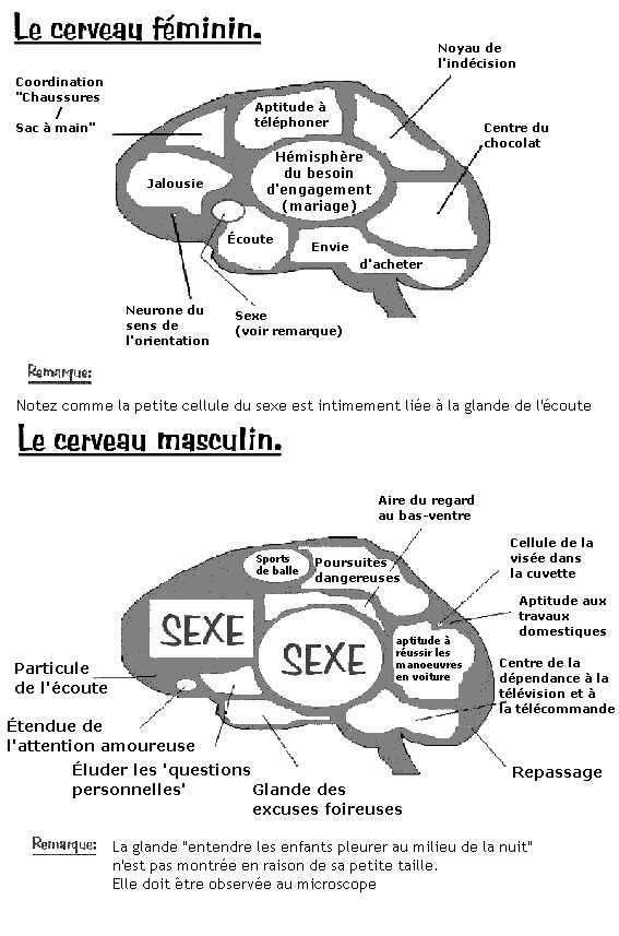 AVEZ VOUS DEJA VU UN CERVEAU DE FEMME & D'HOMME Cervea10