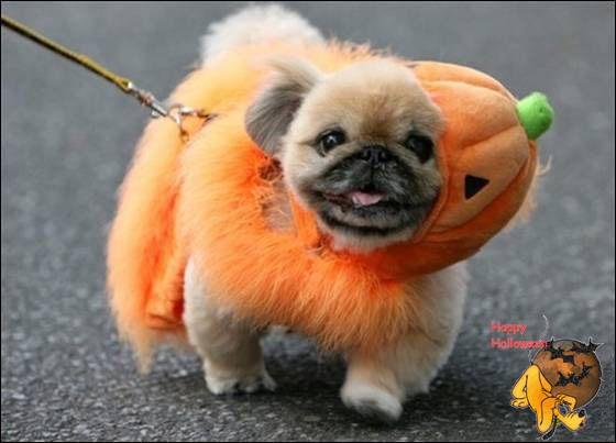 Doggy's Custome Halowe10