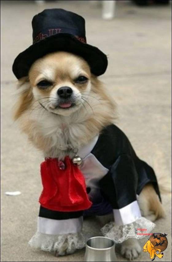 Doggy's Custome Halowe13
