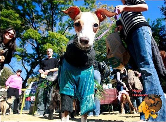 Doggy's Custome Halowe16