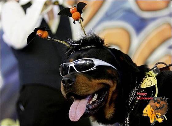 Doggy's Custome Halowe17