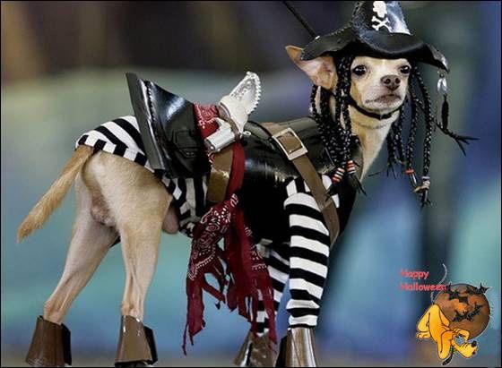 Doggy's Custome Halowe19