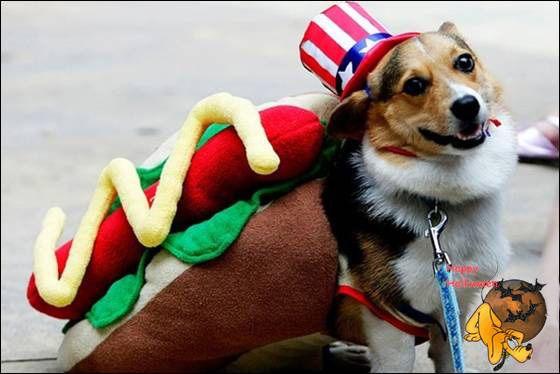 Doggy's Custome Halowe20