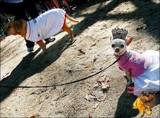 Doggy's Custome Halowe22