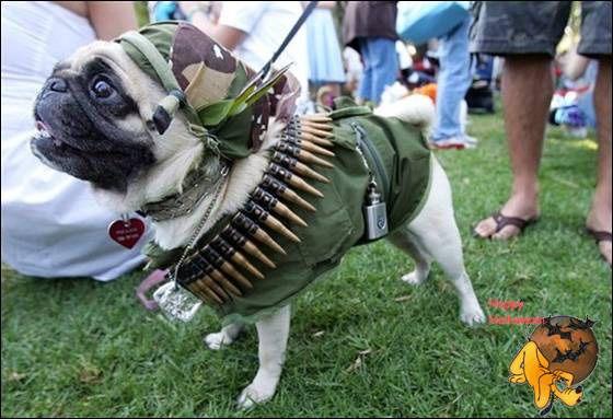 Doggy's Custome Halowe24