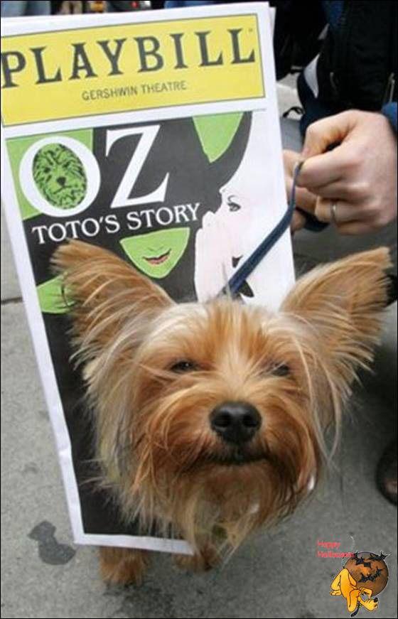 Doggy's Custome Halowe28