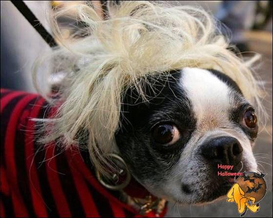 Doggy's Custome Halowe31