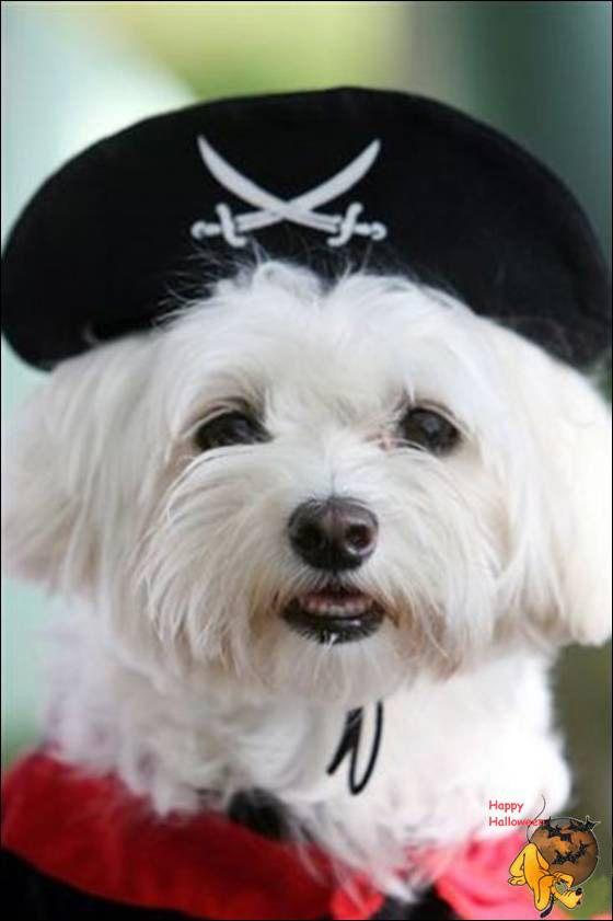 Doggy's Custome Halowe33
