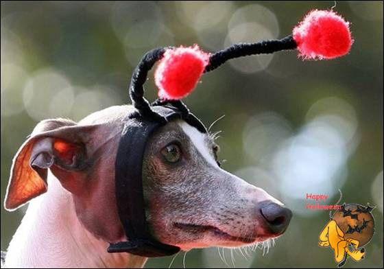 Doggy's Custome Halowe34