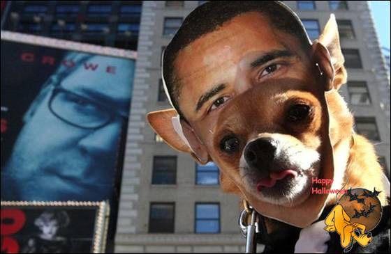 Doggy's Custome Halowe37
