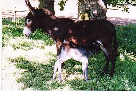 Mon âne...... Sans_t12