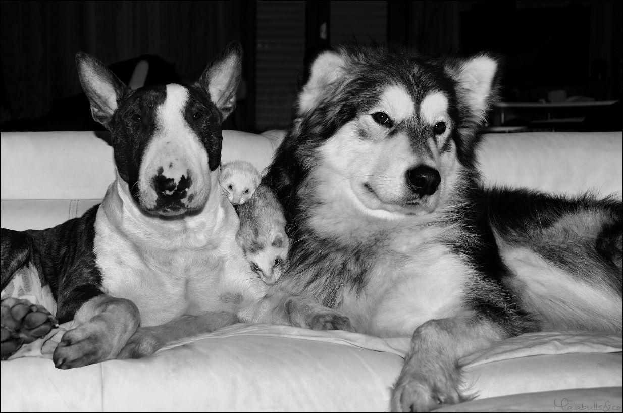 photos de vos chiens et de leurs copains de tous genres  18_03_10