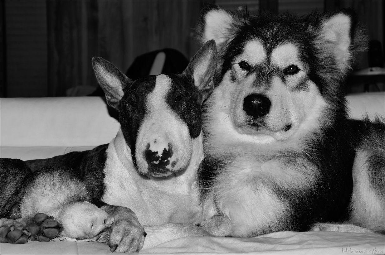 photos de vos chiens et de leurs copains de tous genres  18_03_11