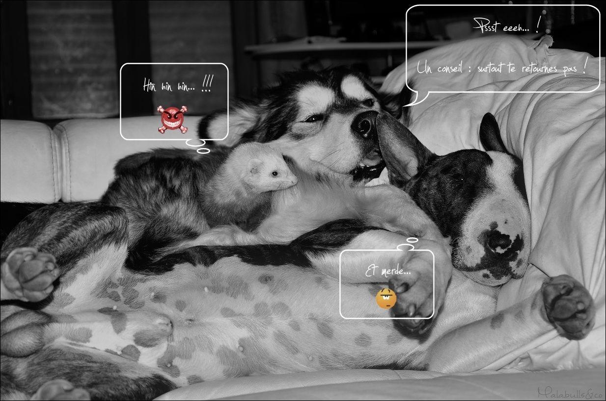 photos de vos chiens et de leurs copains de tous genres  18_03_12