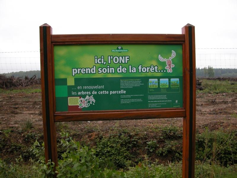 La forêt est sauvée !! Dscn1510